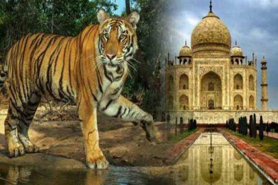 Incentive Tour Agra Ranthambore Jaipur