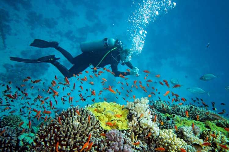South India With Andaman Tour
